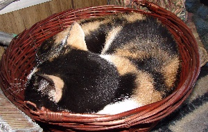 A Basket of TacoCat