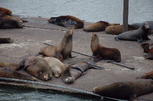 The seals have a reserved dock.